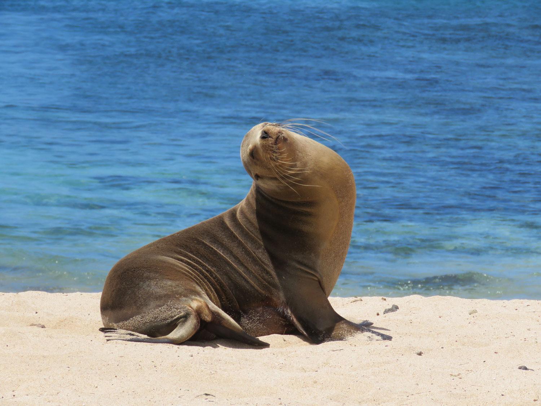 budget Galapagos alle kosten op 'n rijtje