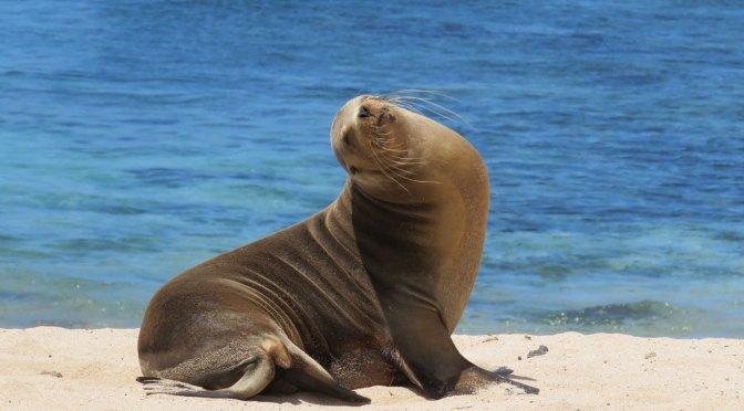 Galapagos, alle kosten op 'n rijtje.