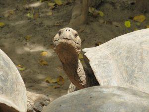Reisgids voor Galapagos