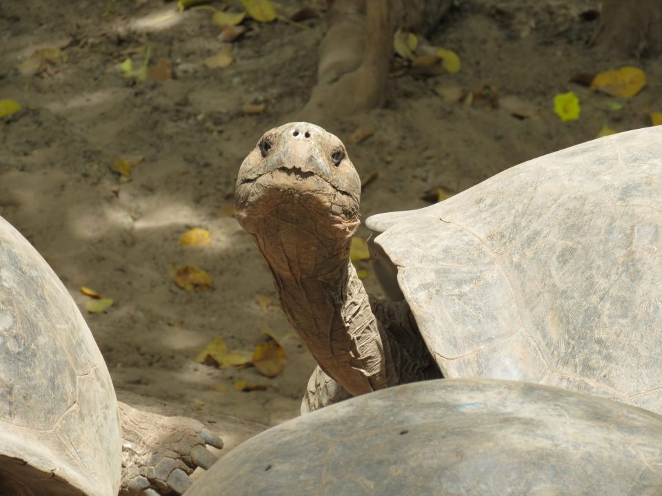 Reisgids Galapagos Ecuadar