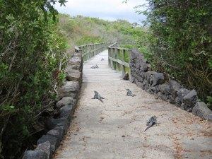 Wandelpad Isabela Galapagos