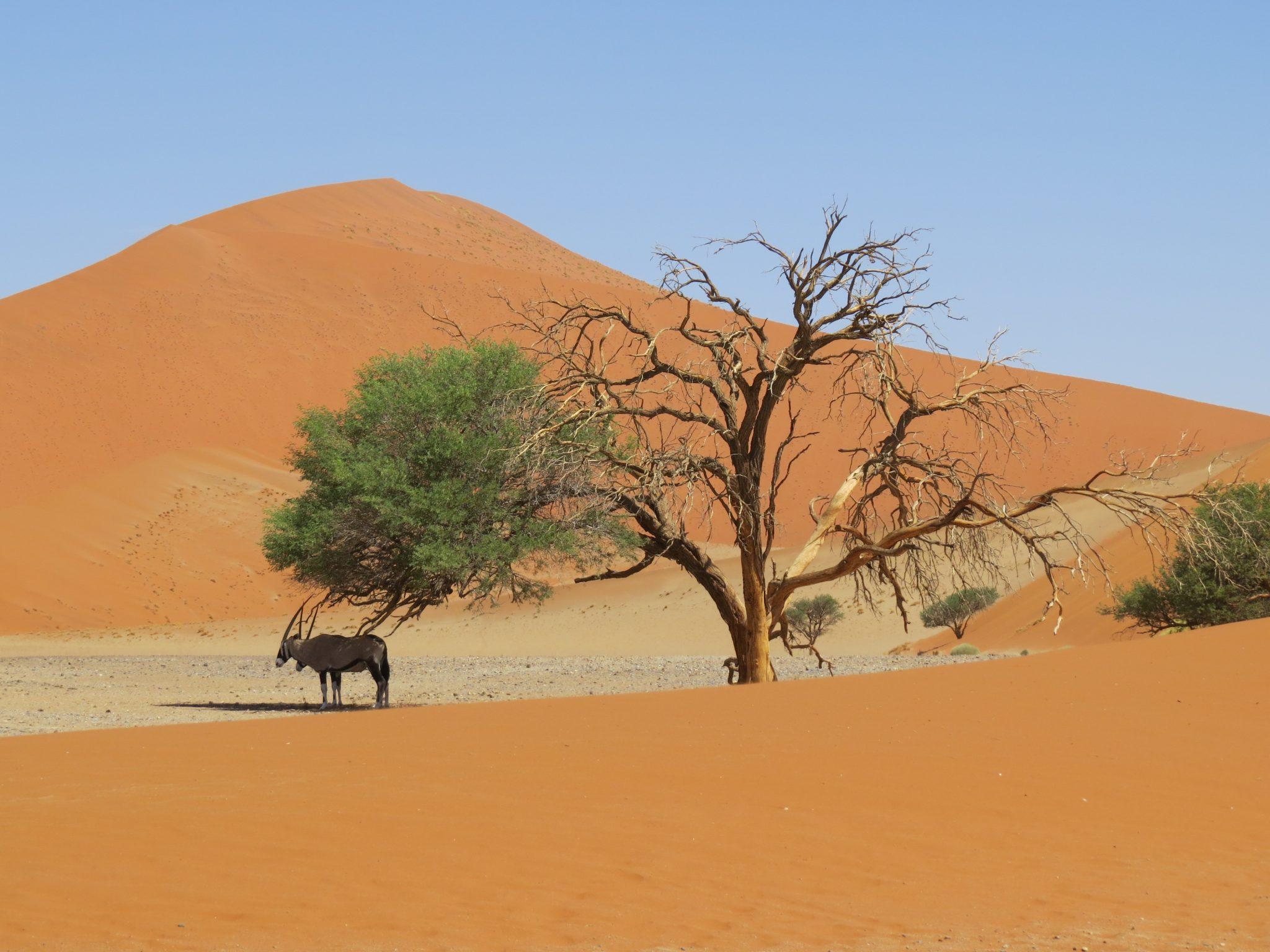 Onze mooiste accommodatie Namibië