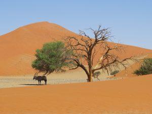 Onze mooiste campings in Namibië