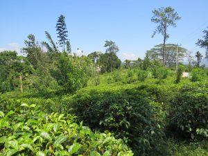 Ooty en Nilgiri Hills India