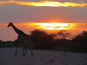 Okaukuejo Camp Etosha Namibie