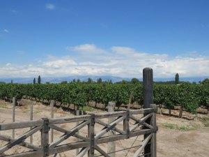 Wijngaard Mendoza Argentinie
