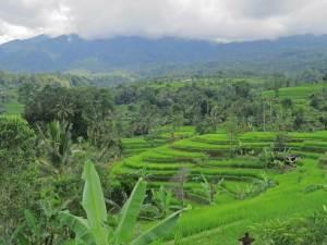 Binnenland Bali dagtrip vanuit Ubud Bali
