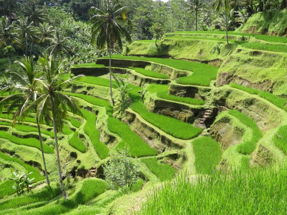 Gratis reisgidsje voor Ubud