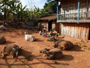 Dorpsleven omgeving Kalaw Myanmar