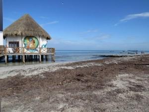 Zeewier Isla Holbox Mexico