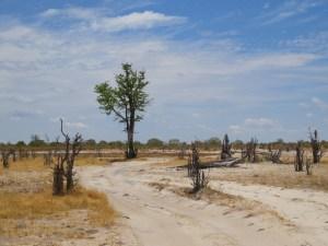 Moremi NP Botswana
