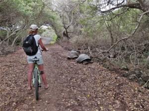Fiets huren op Isabela Galapagos