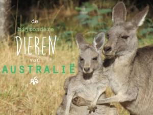 bijzondere-dieren-van-Australië