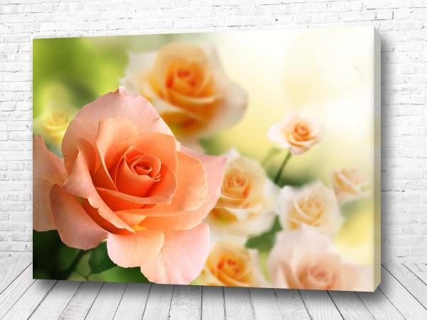 Постер Нежная роза