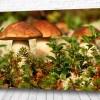 Постер Лесные грибы