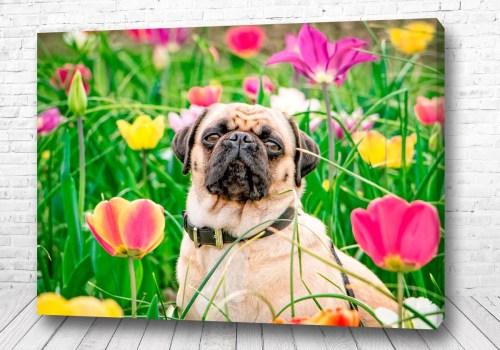 Постер Мопс в цветах