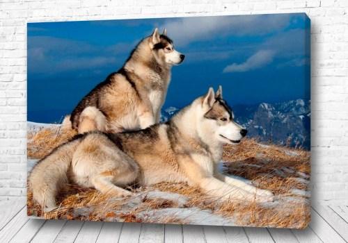 Постер В поле волков