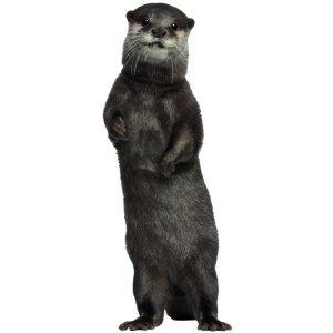 Muursticker zoo family otter