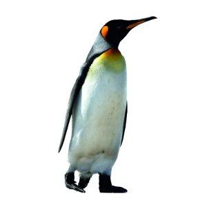 muursticker zoo family pinguïn