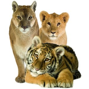 Muursticker zoo family stoere dieren