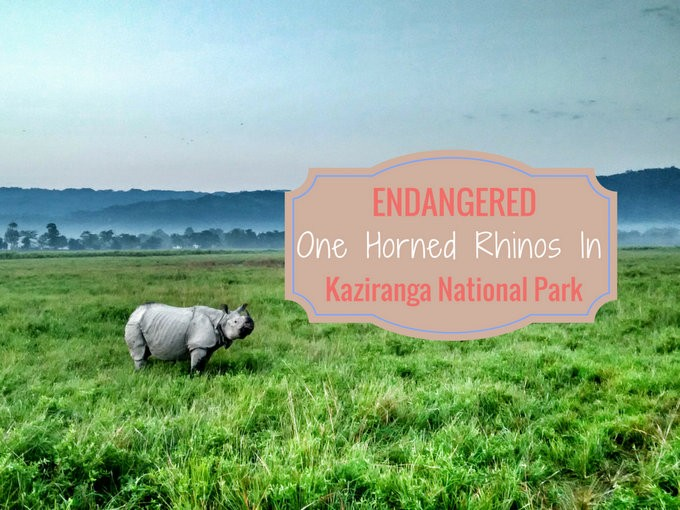 Absolutely Food asian one horned rhino due time