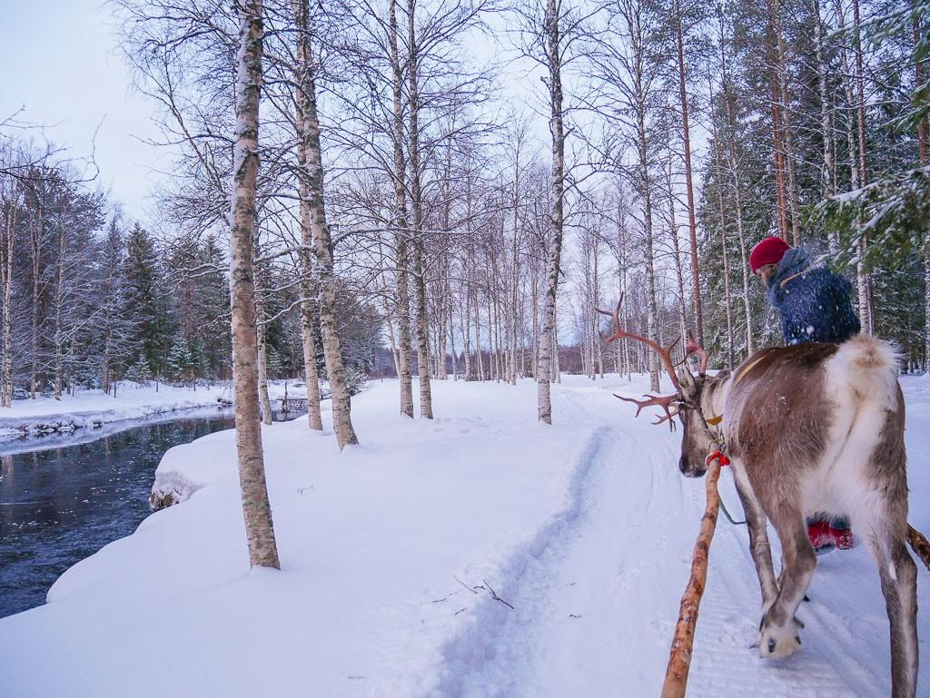 Visit a Reindeer Farm in Finland