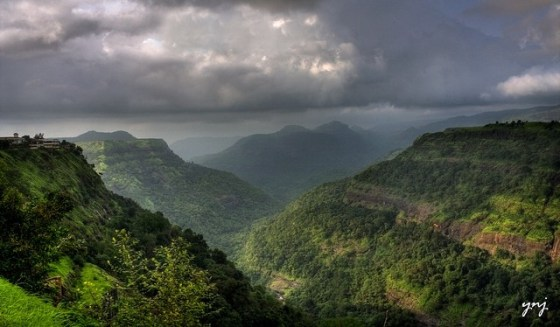 india's jungle should i go to india