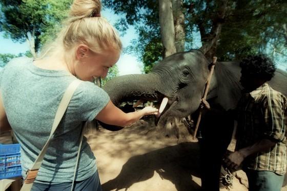 elephants are dubare camp karnataka