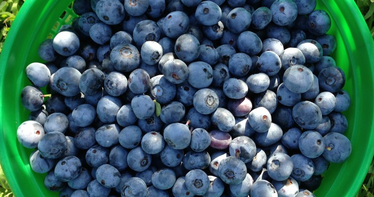 Blueberries and Hushpuppies