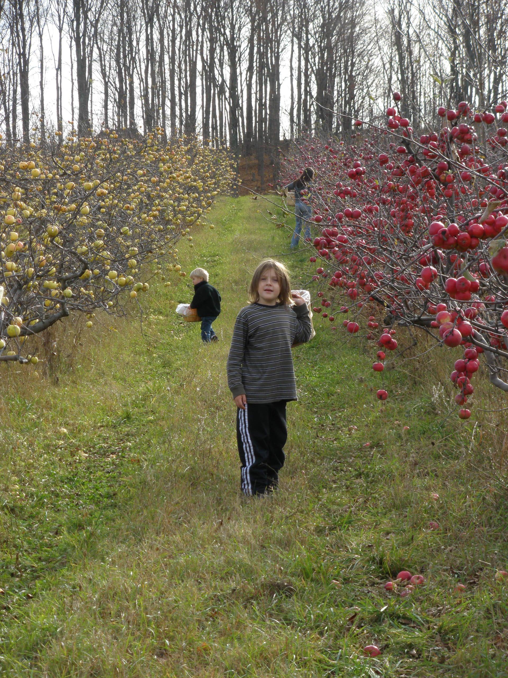 Walton's Orchard