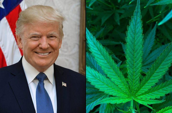 donald trump marijuana 1536x922 1