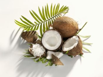 Resultado de imagen para coco fruta