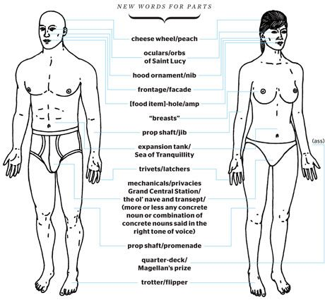 Funny Body Part Names Weird Names For Human Anatomy Illustration