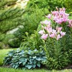 20 Best Yard Landscaping Ideas For Front And Backyard Landscaping Design Advice