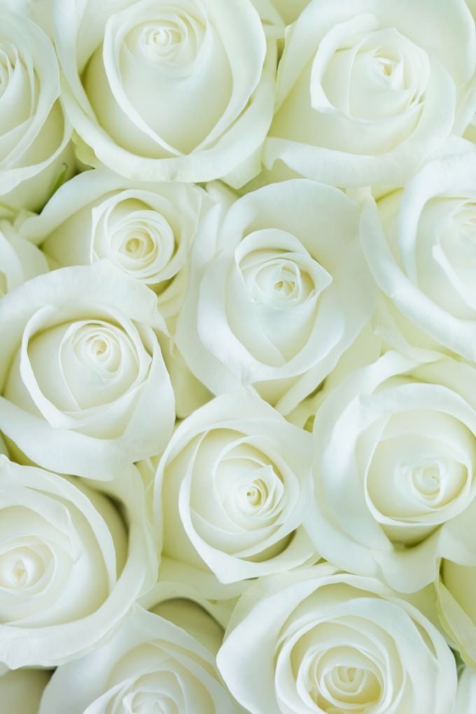 Images Of White Rose Flowers Viewsitenew