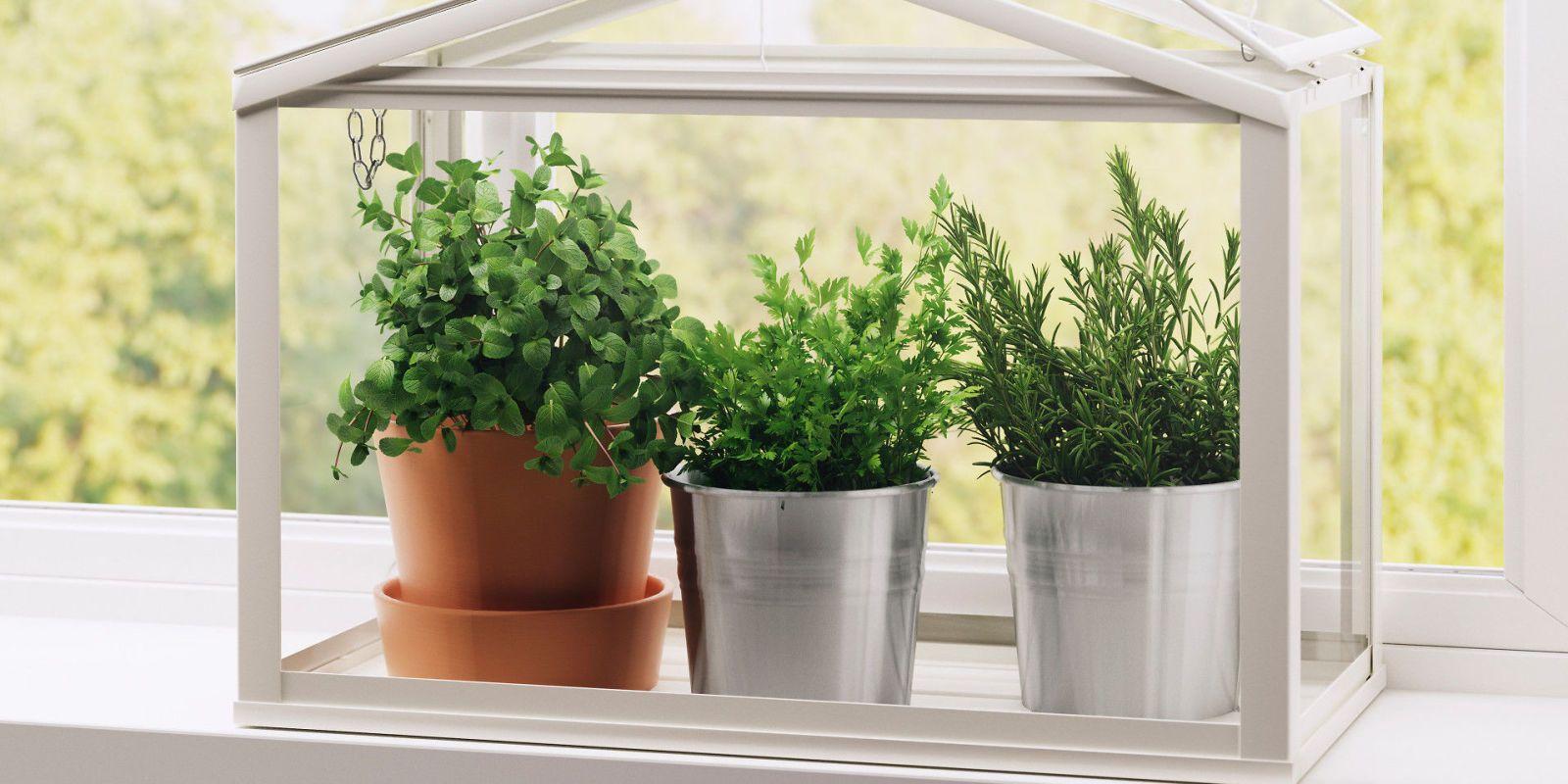 17 Indoor Herb Garden Ideas