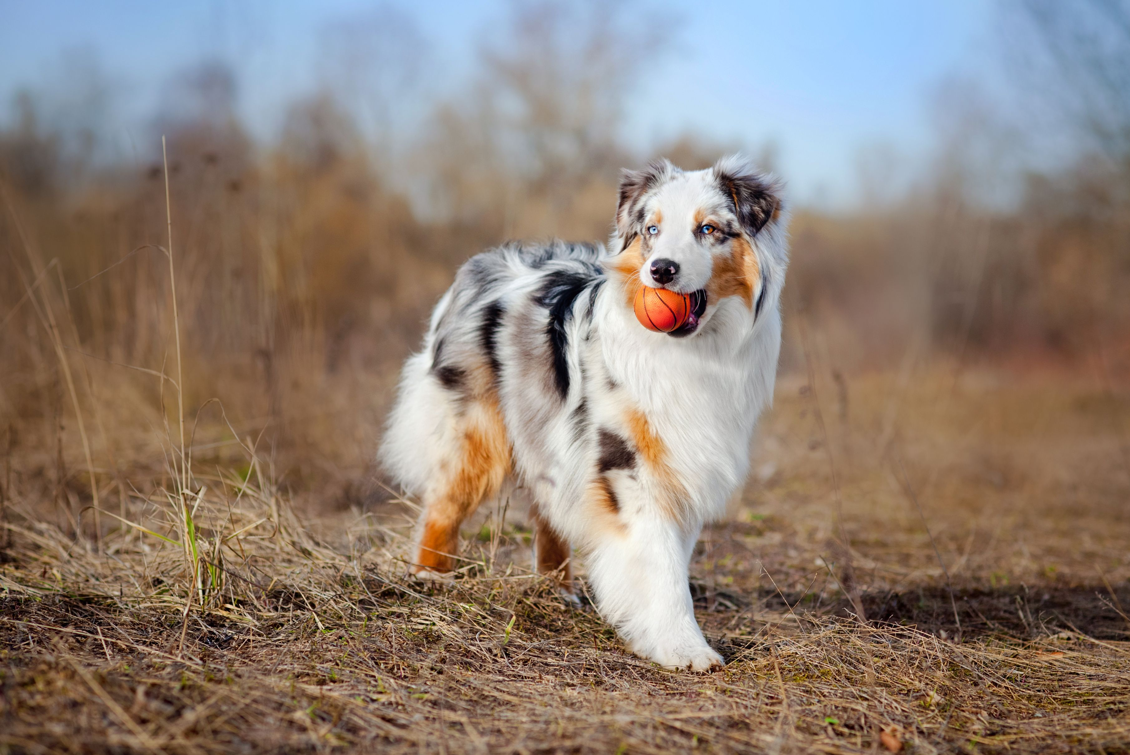 40 Best Medium Sized Dog Breeds List Of Popular Cute Medium Sized Dogs For Families