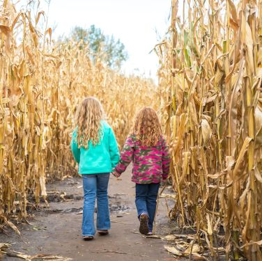 31 Best Corn Mazes Near Me - Best Haunted and Family-Friendly Corn Mazes in America