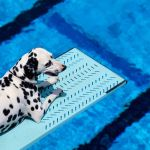 Black And White Dog Breeds Dalmatian Border Collie Boston Terrier