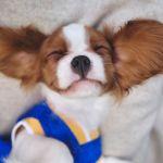 15 Cutest Dog Breeds Adorable Dog Breeds