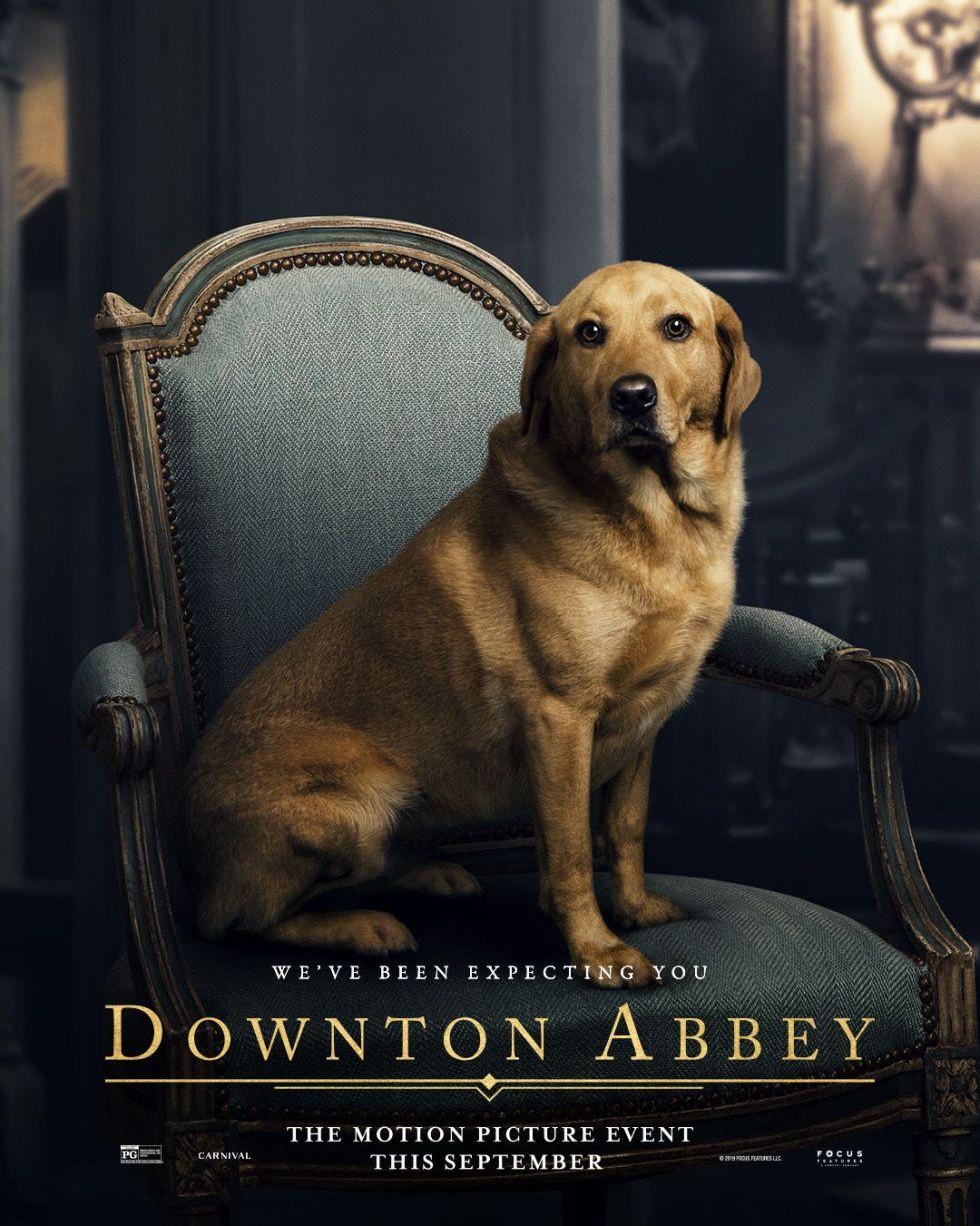 Downton Abbey Dog