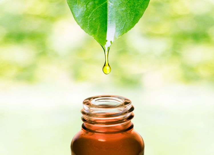 Essential oil dropping from leaf .Aromatherapy.