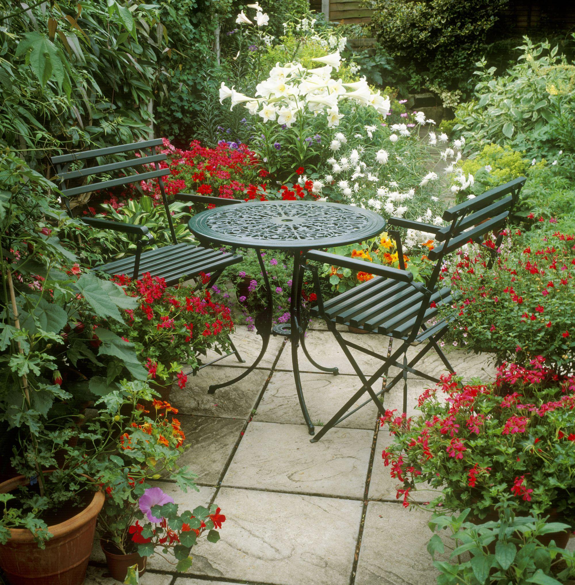 20 best patio plants lush plants for