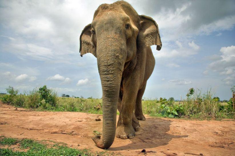 Foto de un elefante.