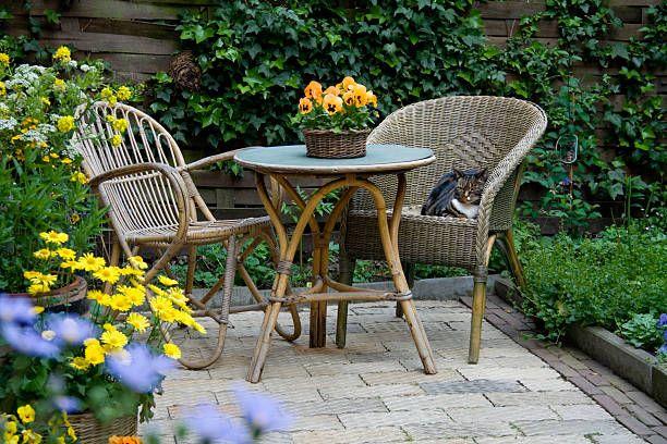 15 best patio plants outdoor patio
