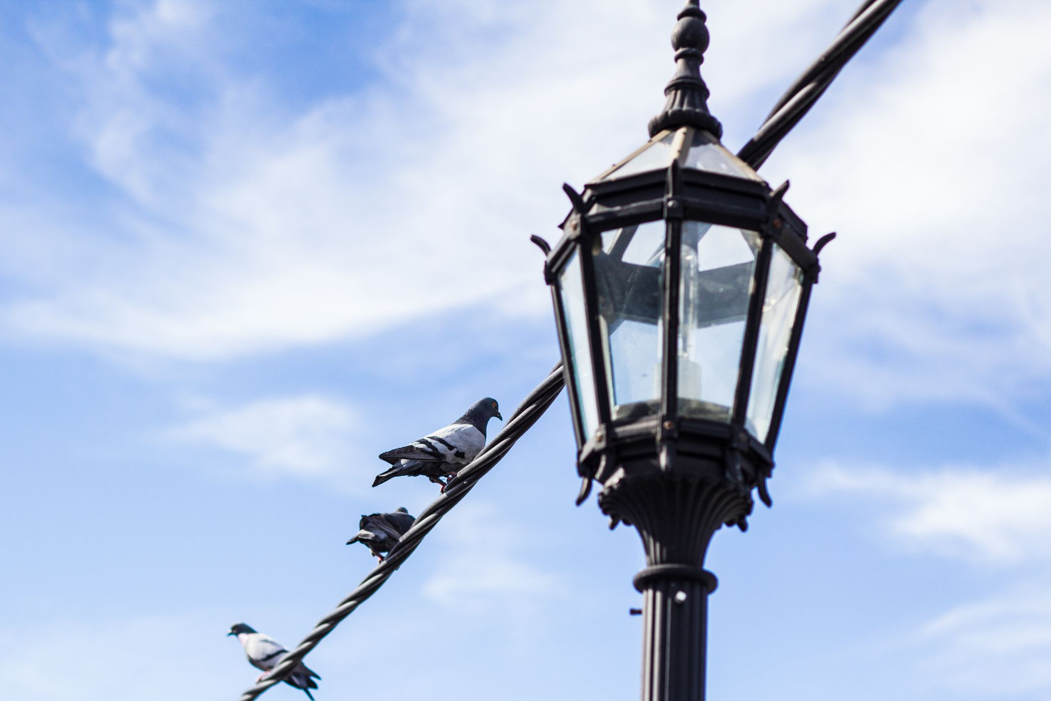 Low Angle View Of Pigeons Perching On Cable By Gaslight Against Sky