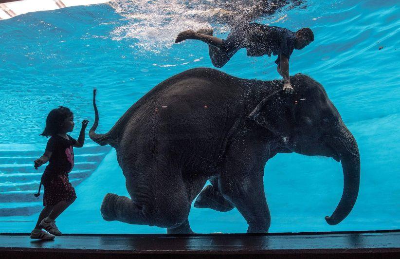 Elefante zoo de Tailandia