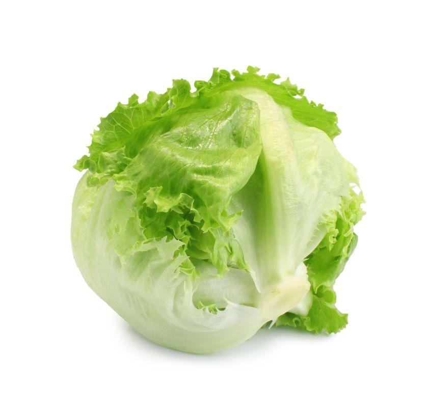 Green Iceberg lettuce on White Background