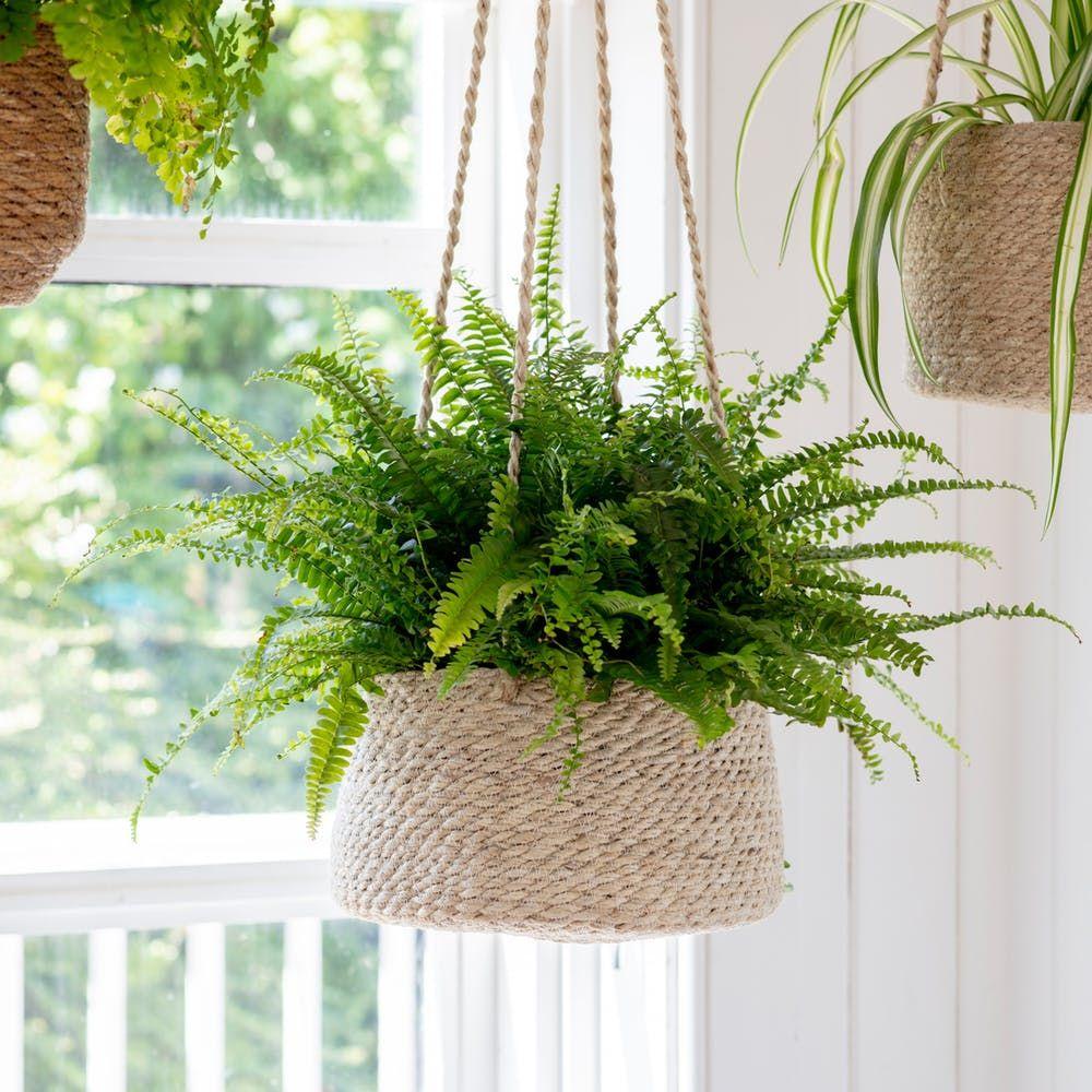13 Best Indoor Hanging Planters on Hanging Plant Pots Indoor  id=91636