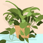 Golden Pothos Is The Best Indoor Houseplant To Grow Because It Refuses To Die